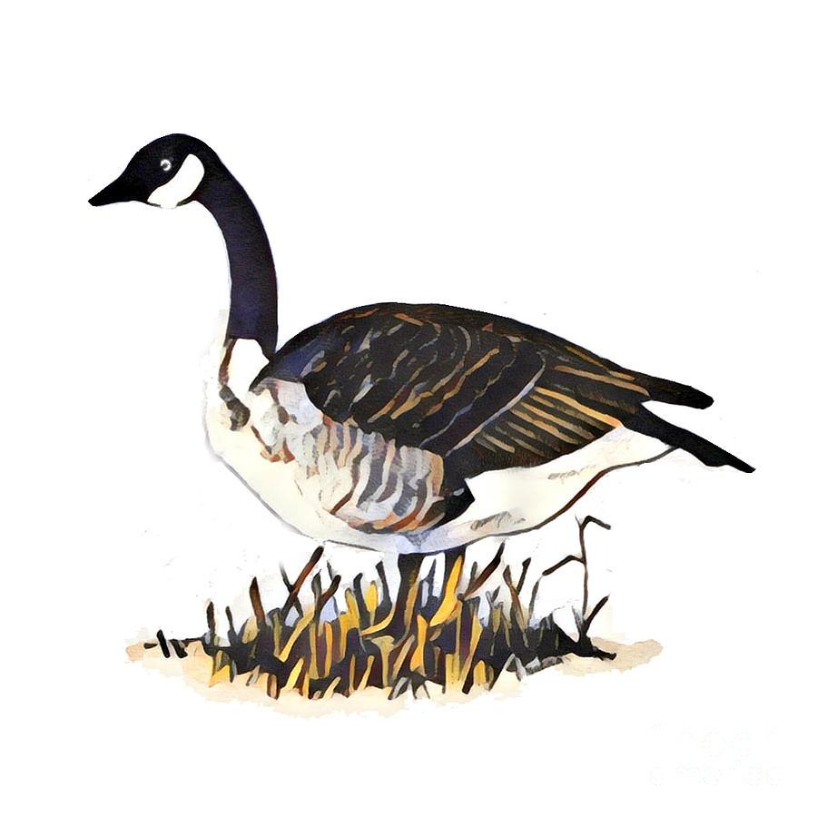 Canada Goose by Art MacKay