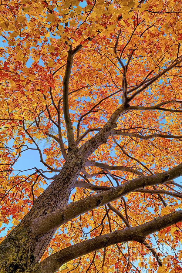 Canadian Autumn Colors Photograph