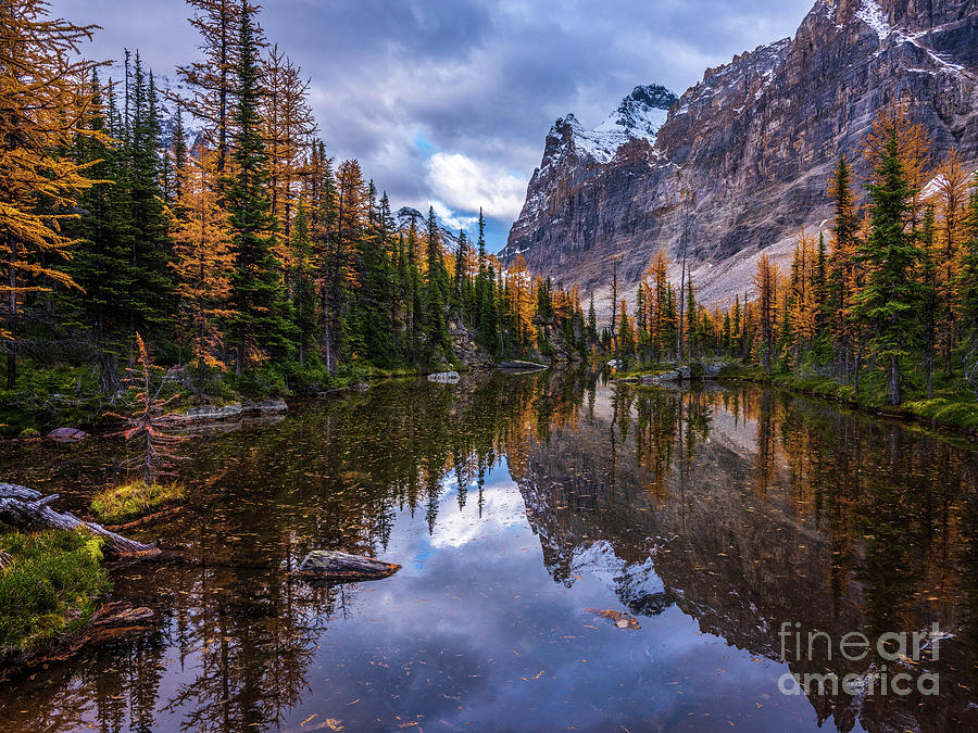 Canadian Rockies Fall Colors Larches Reflection by Mike Reid