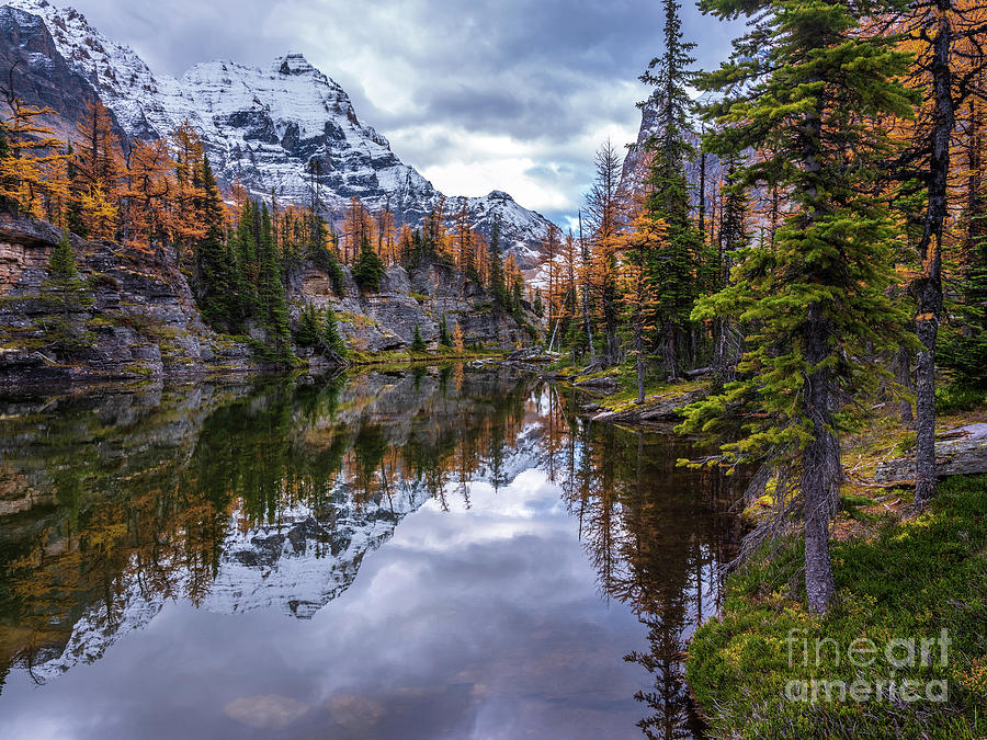 Canadian Rockies Fall Colors Reflection by Mike Reid