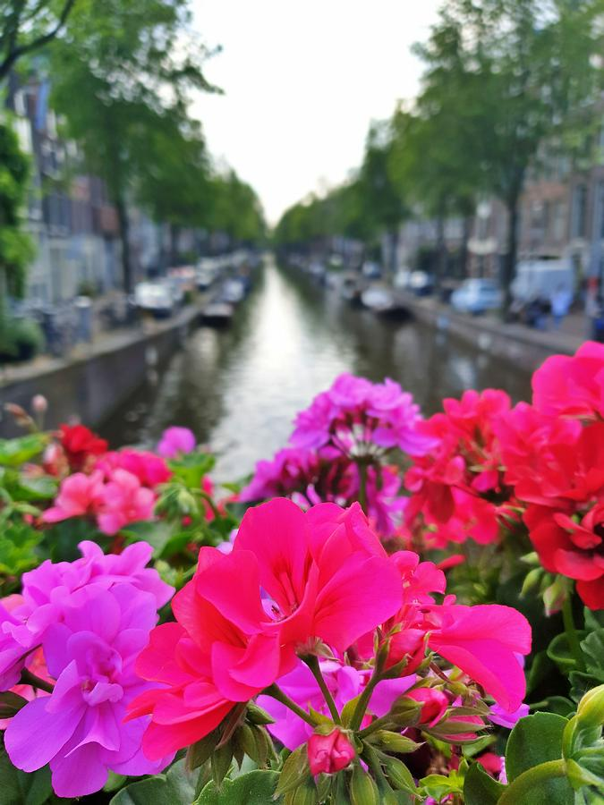 Canal Flowers by Andrea Whitaker