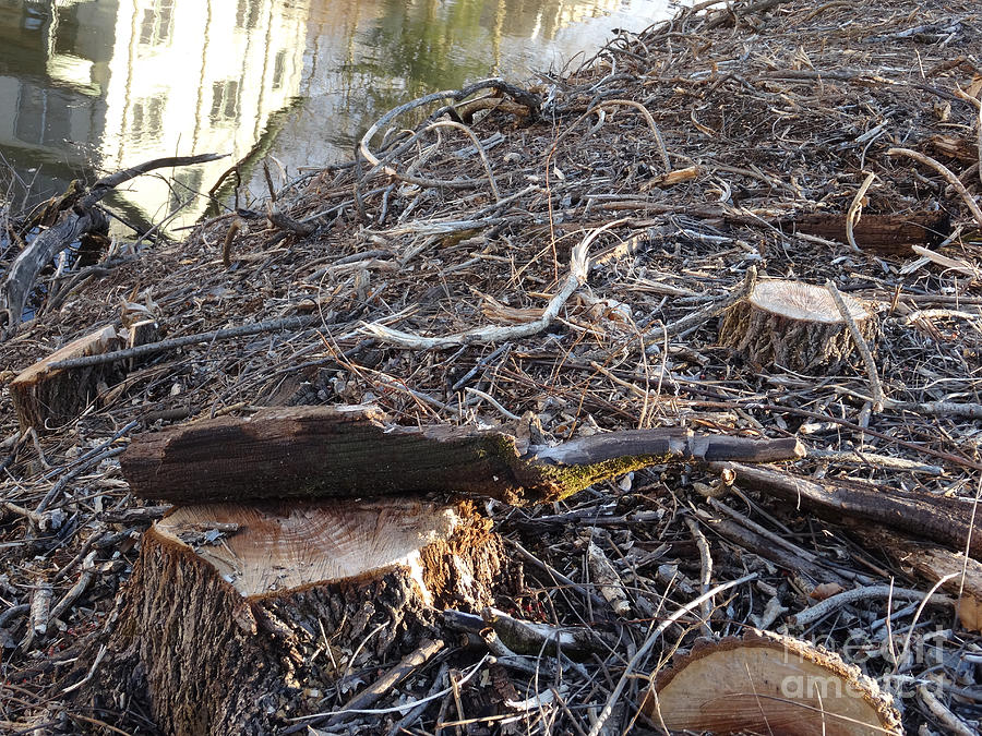Canal Stumps-037 by Christopher Plummer