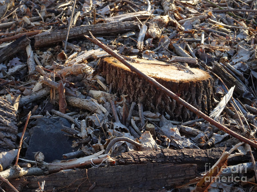 Canal Stumps-041 by Christopher Plummer