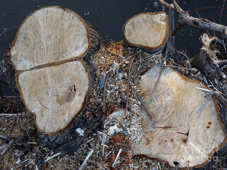 Canal Stumps-059 by Christopher Plummer