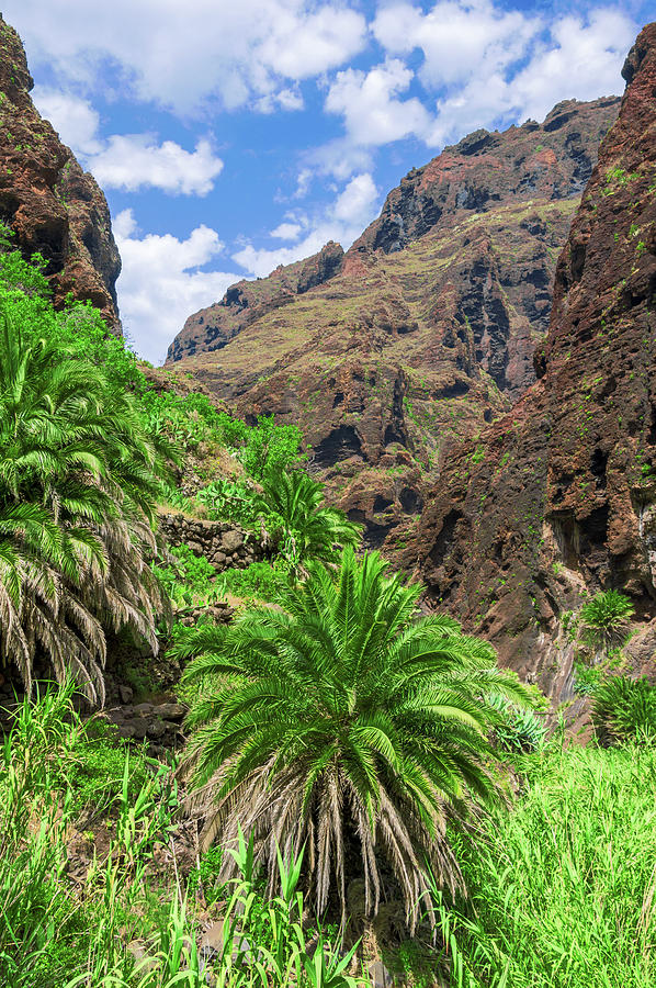 Canary date palm in Masca by Sun Travels