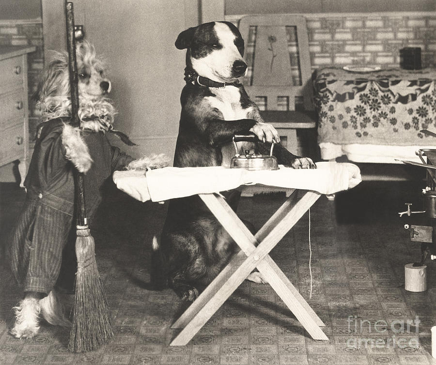 1920s Photograph - Canine Chores by Everett Collection