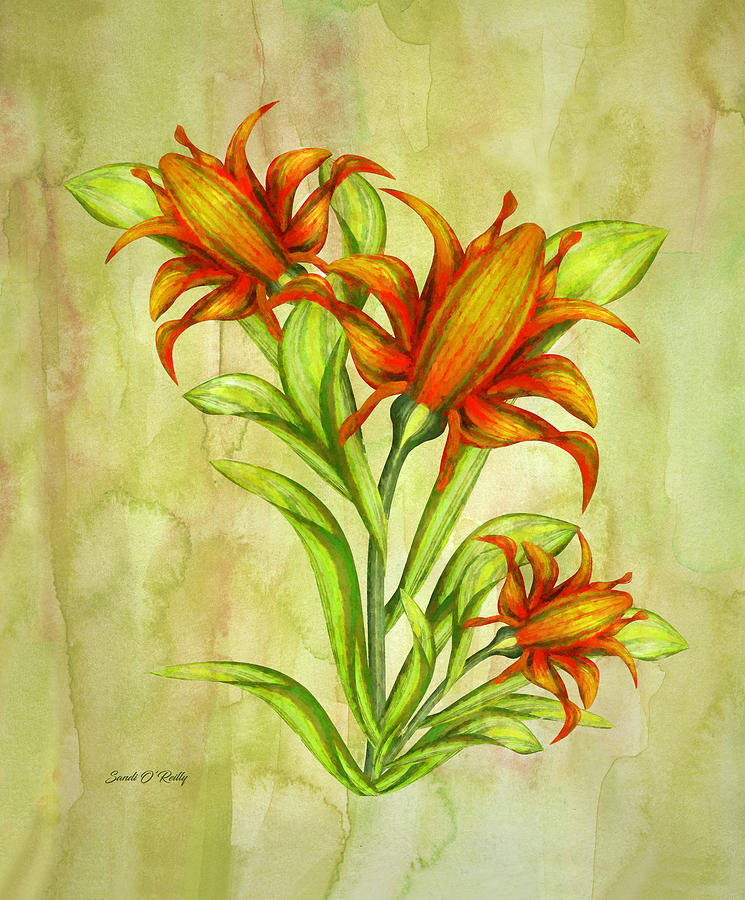 Canna Flowers Watercolor by Sandi OReilly