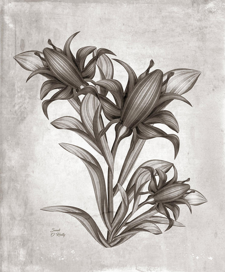 Canna Flowers Watercolor Sepia by Sandi OReilly