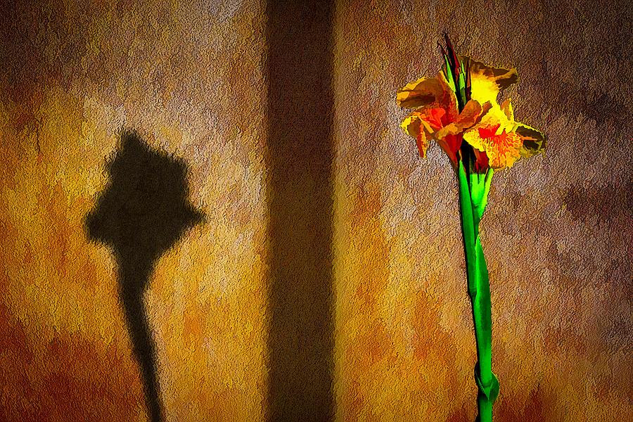 Canna Lily Sunset Photograph