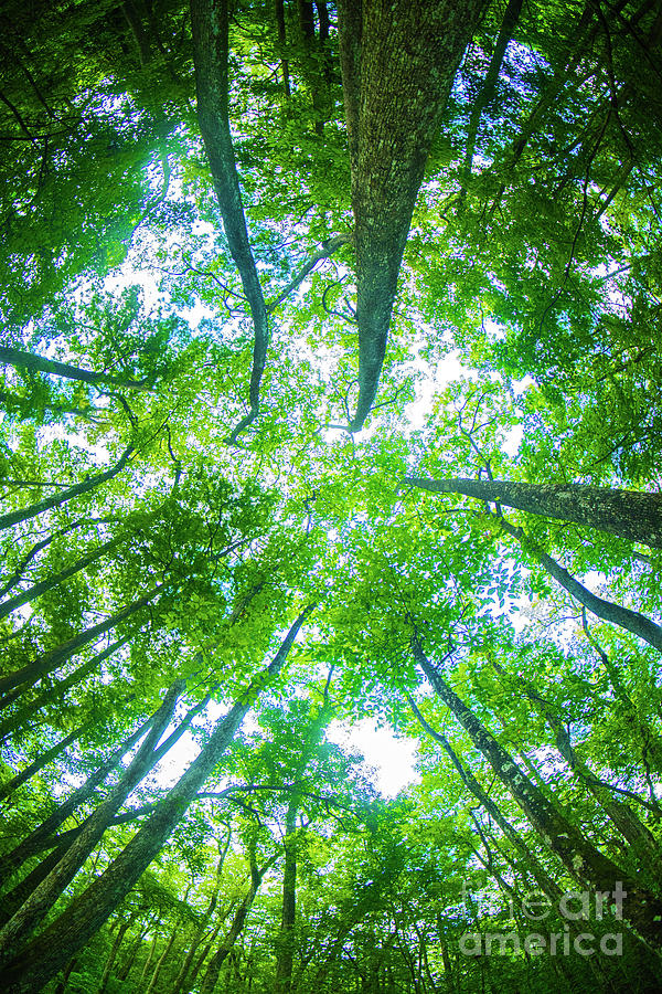Canopy Coverd by Spade Photo