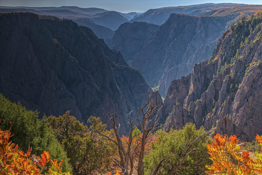 Canyon Greeting by Angelo Marcialis