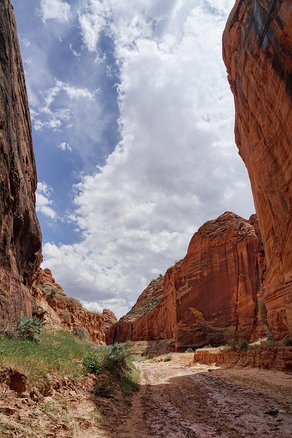 Canyon Skies by Leda Robertson