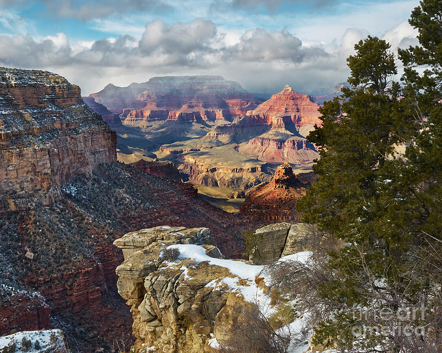Canyon Tree by Steve Ondrus