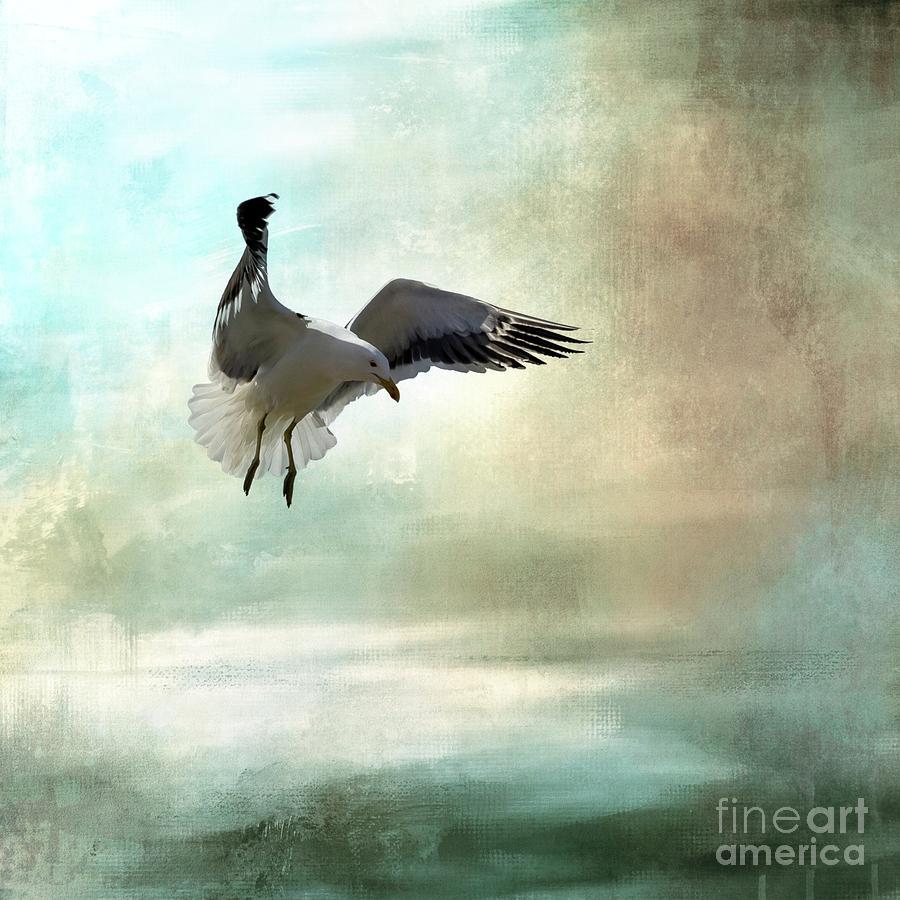 Bird Photograph - Cape Gull In Flight by Eva Lechner
