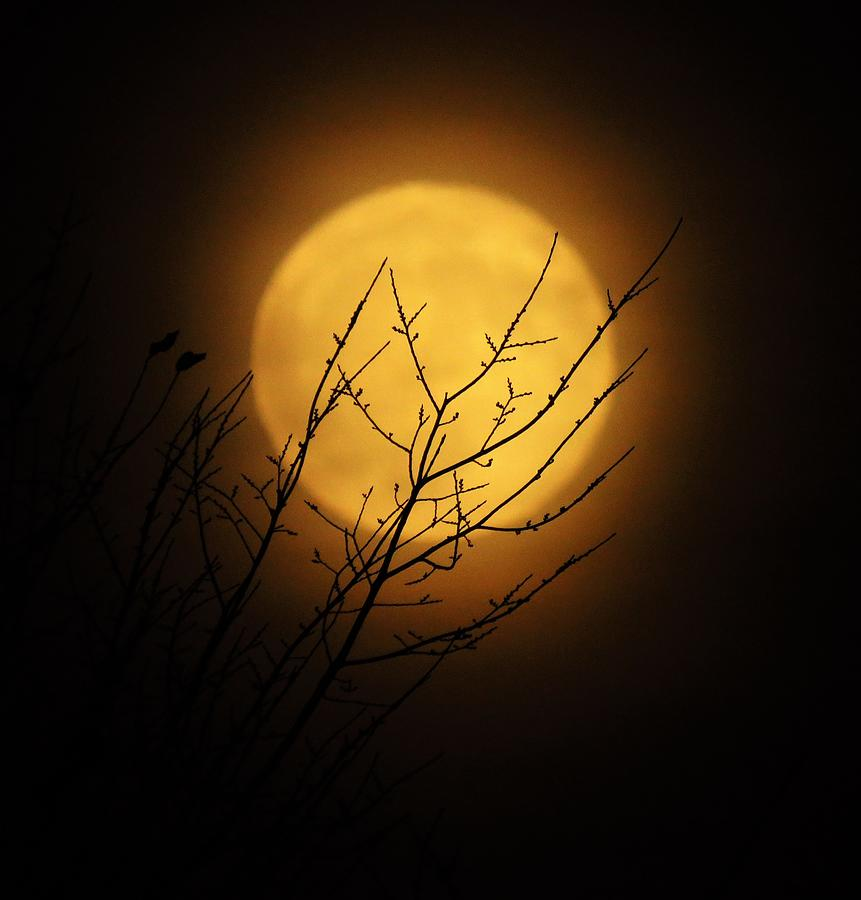 Captivating Harvest Moon  by Lori Frisch