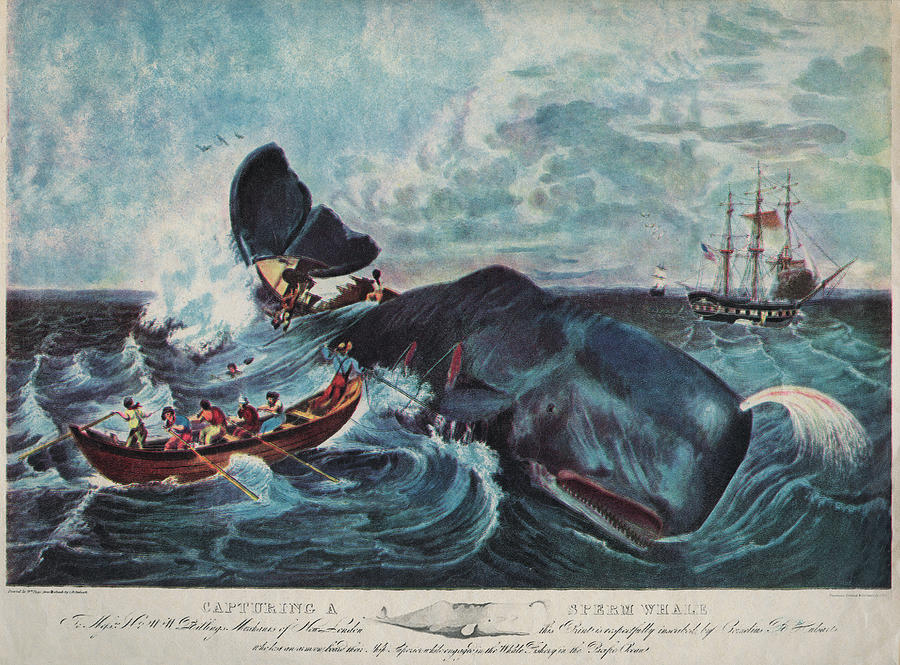 Capturing A Sperm Whale Photograph by Hulton Archive