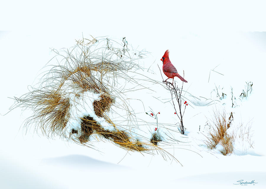 Bird Digital Art - Cardinal Angel In The Snow by M Spadecaller