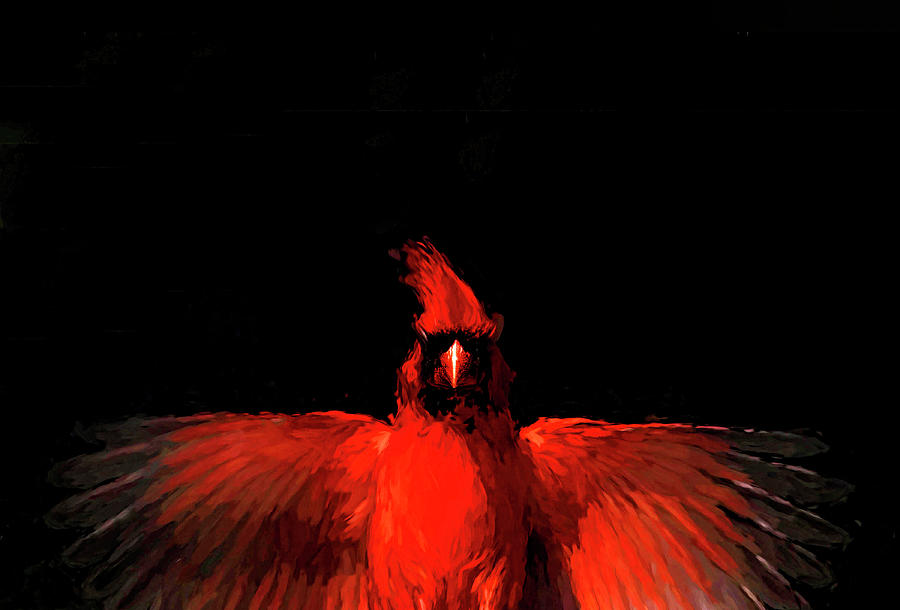 Cardinal Drama by Pete Rems