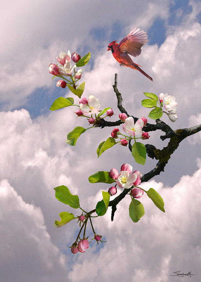 Cardinal in Apple Tree by Spadecaller