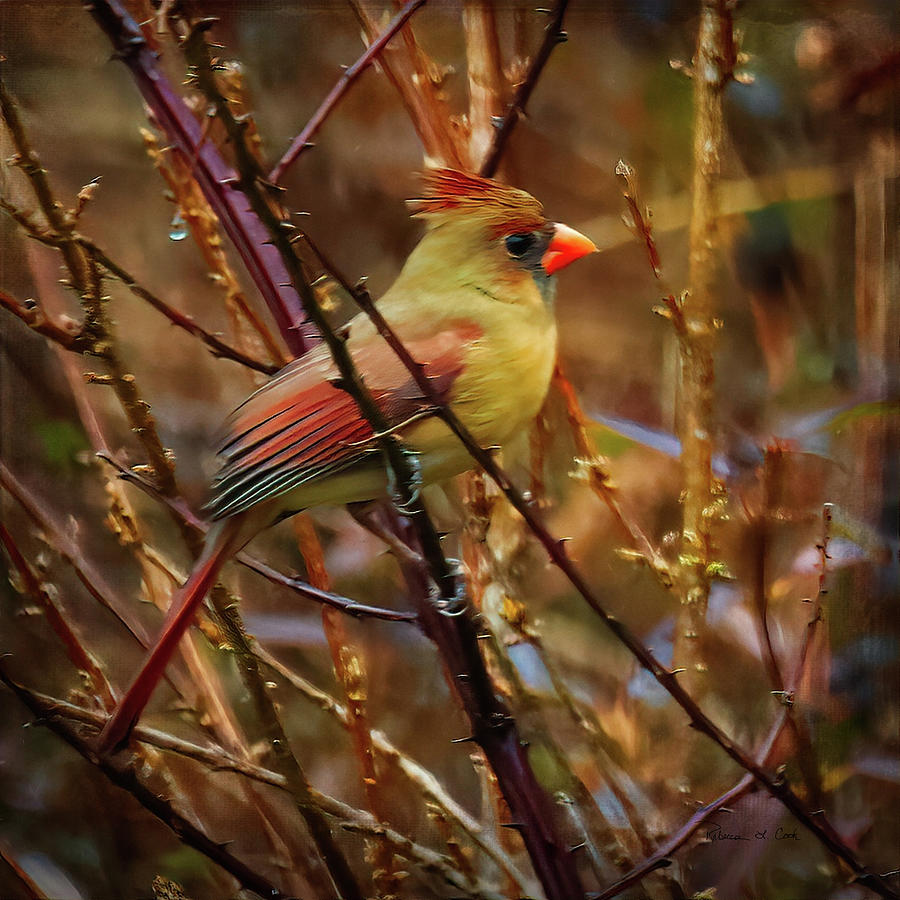 Cardinal In The Briar Patch by Bellesouth Studio