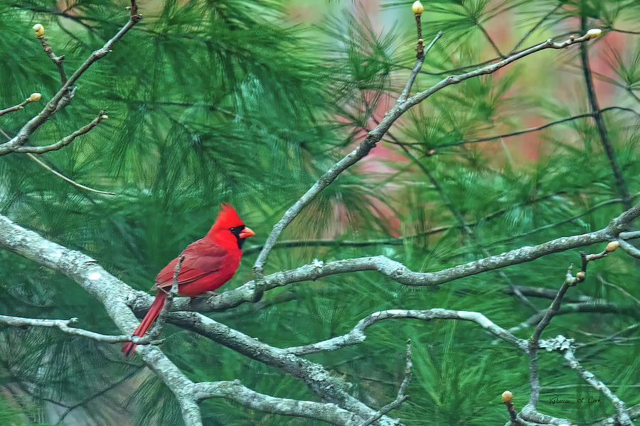 Cardinal In Tulip Poplar by Bellesouth Studio