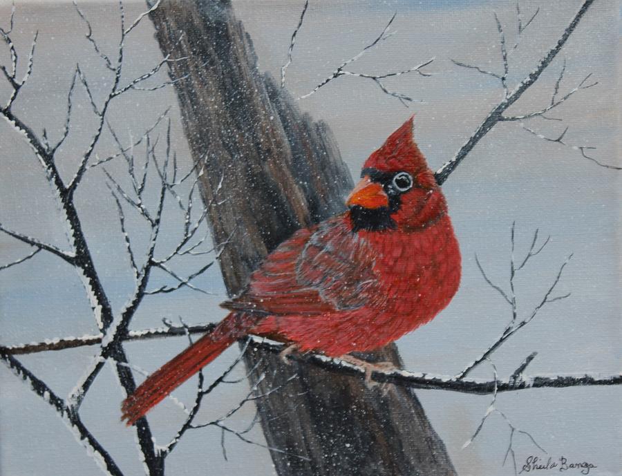 Cardinal in Winter by Sheila Banga