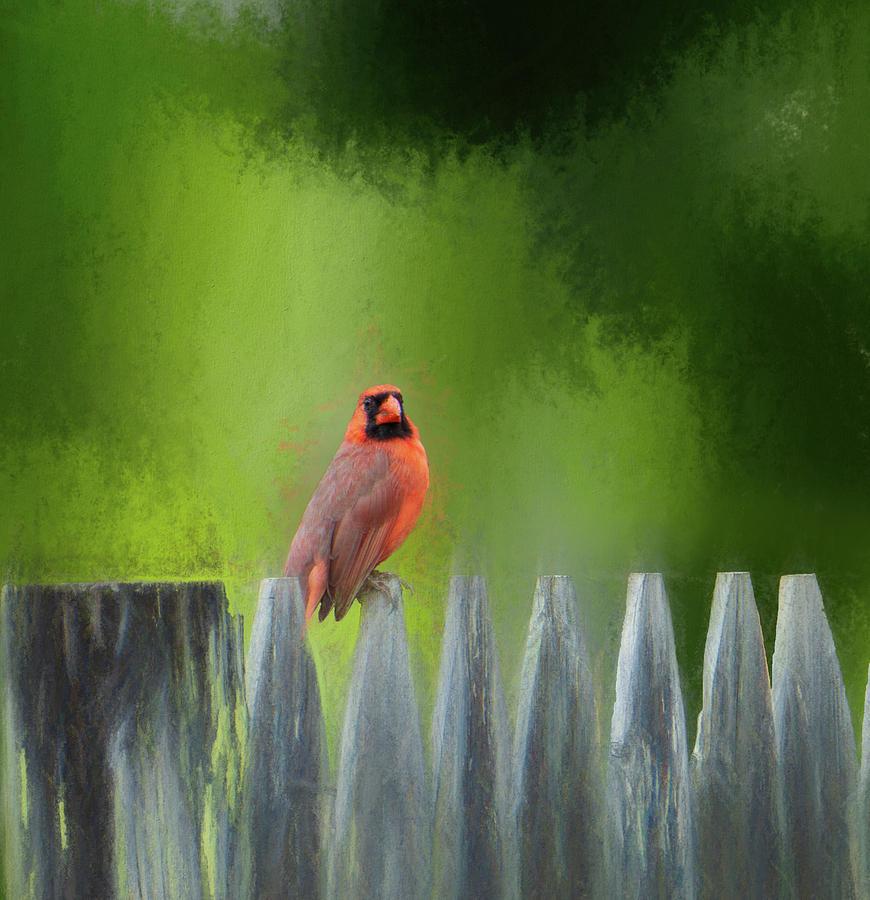 Cardinal on a Fence Post by Jason Fink