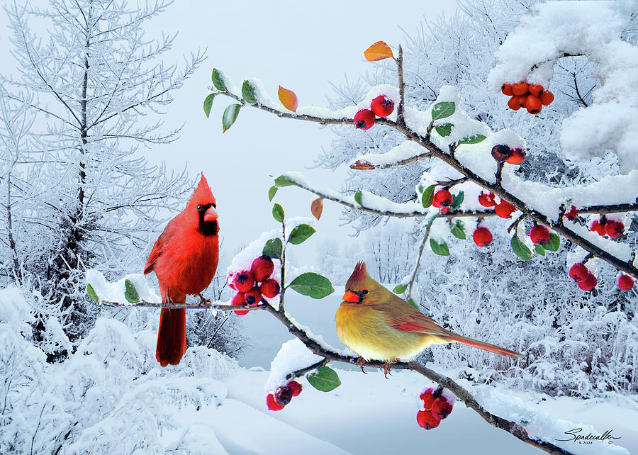 Cardinals in the snow digital art by m spadecaller - Pictures of cardinals in snow ...