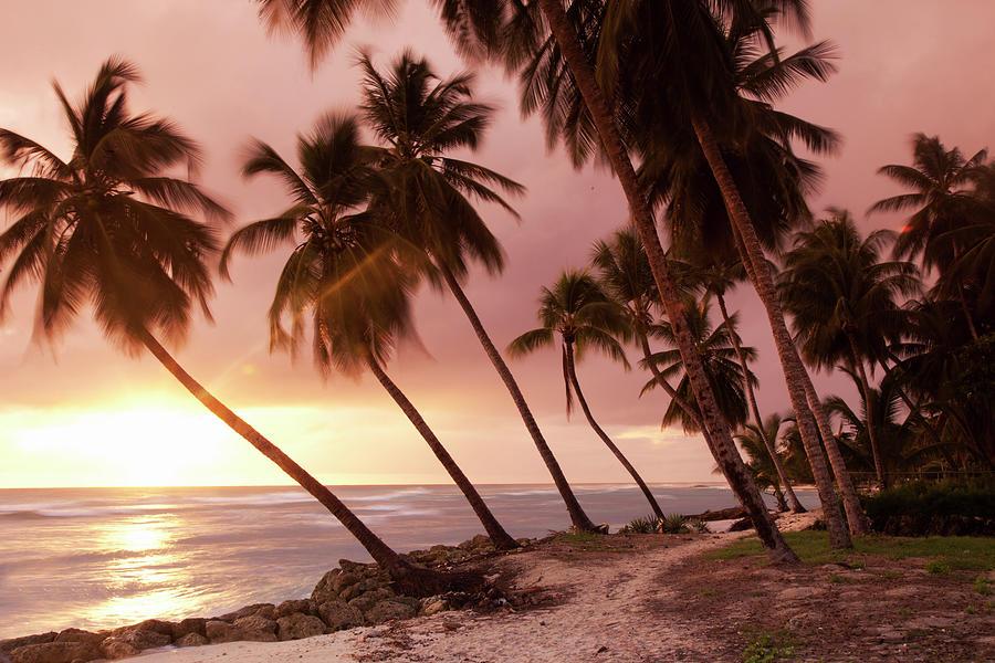 Caribbean, Barbados, Pristine Beach Photograph by Buena Vista Images