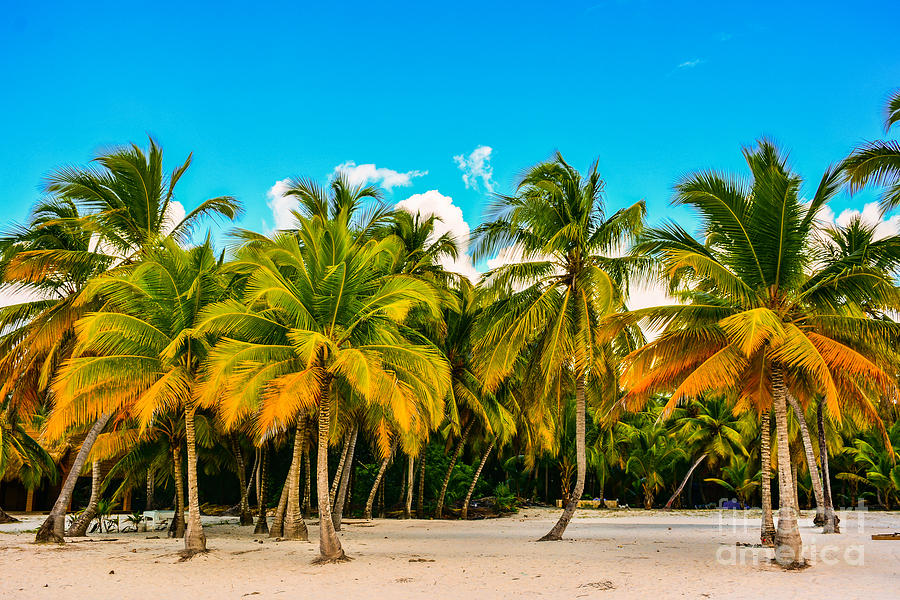Sunrise Photograph - Caribbean Landscape With A Clear Sky by Marco Bicci