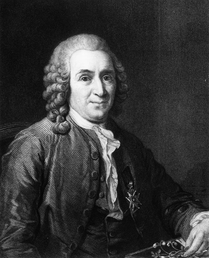 Carl Von Linnaeus Digital Art by Hulton Archive