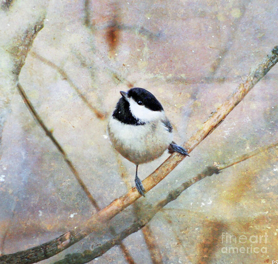Carolina Chickadee - Textured Art by Kerri Farley