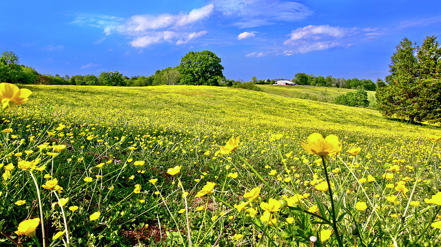Carpet of Flowers, Smith Mountain Lake by James B Roney
