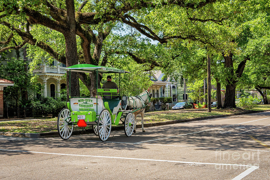 Carriage For A Bride New Orleans Photograph