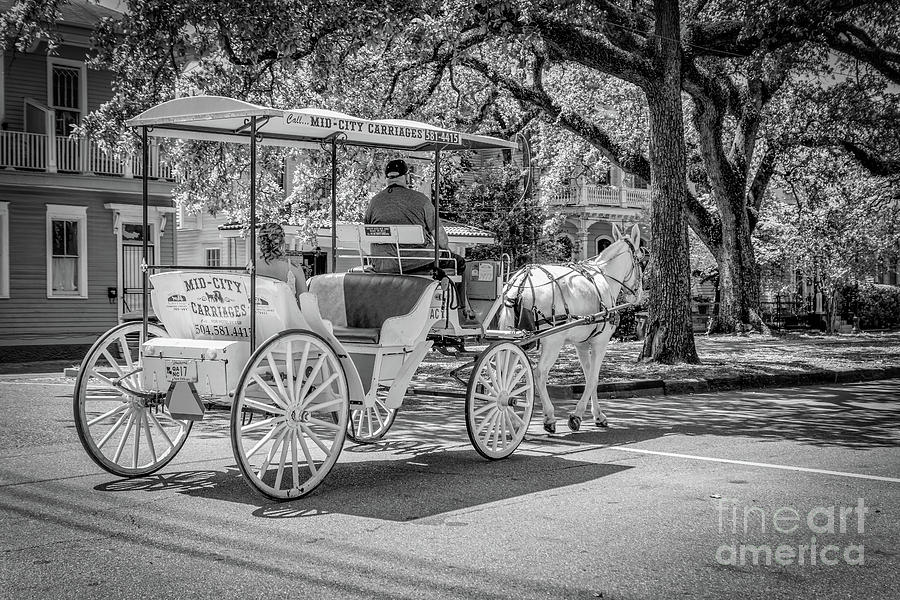 Carriage Ride on Esplanade Ave NOLA-bw by Kathleen K Parker