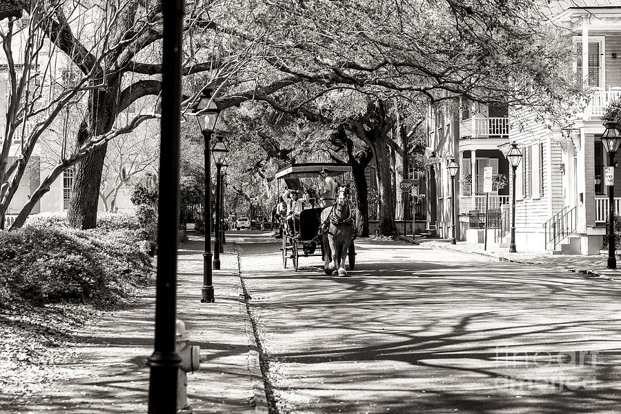 Carriage Ride Photograph - Carriage Ride Through Charleston by John Rizzuto