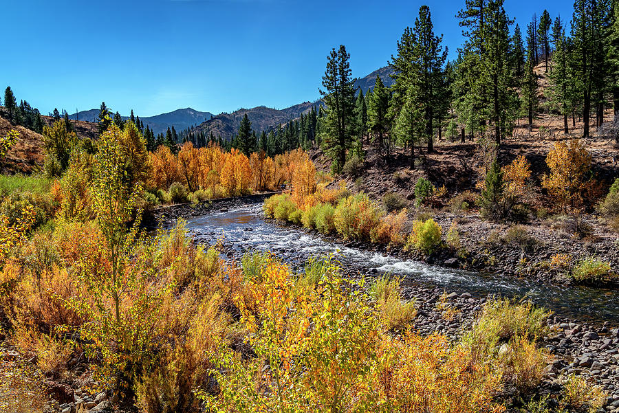 Carson River by Maria Coulson