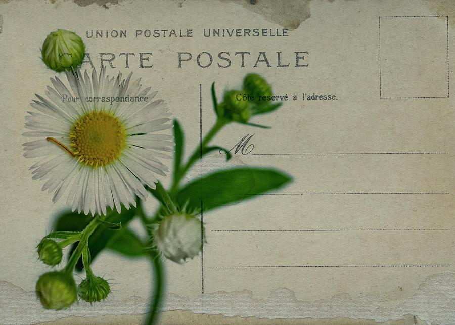 Carte Postale by Cathy Kovarik