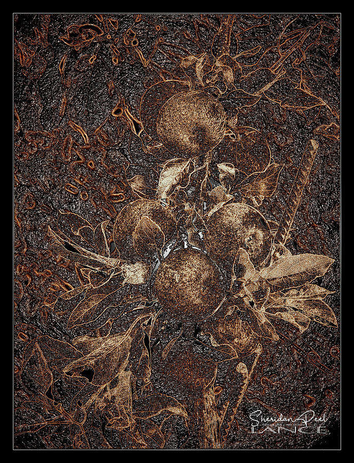 Carved Apples by Lance Sheridan-Peel