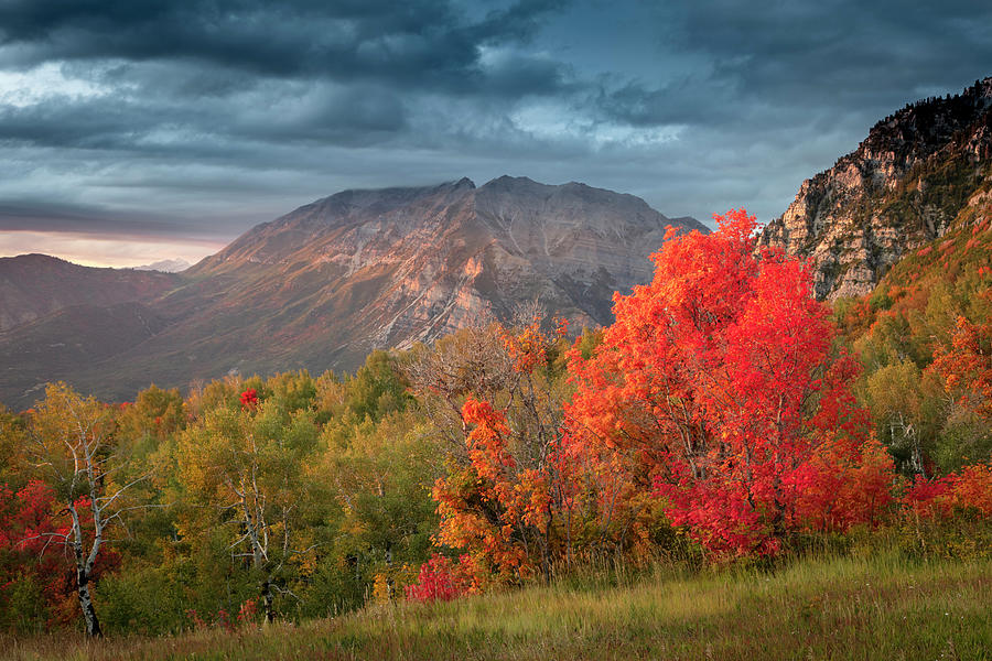 Cascade Meadows Red Maple by Johnny Adolphson