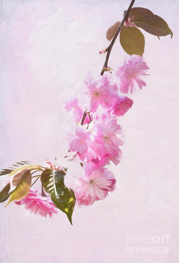 Cascading Kwanzan Cherry Blossoms by Anita Pollak