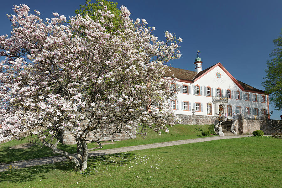Castle Buergeln With Blooming Magnolia Tree In Spring Near