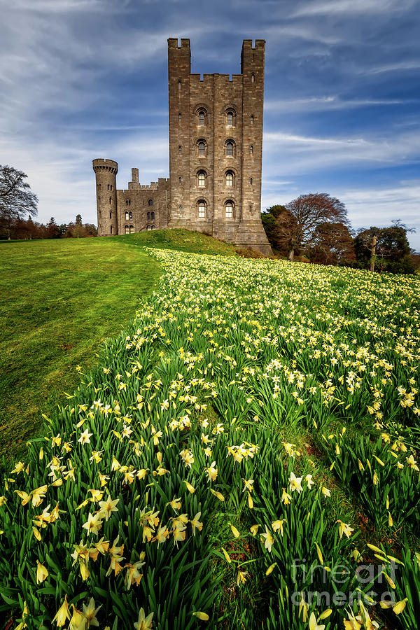 Castle Photograph - Castle Keep Daffodils by Adrian Evans