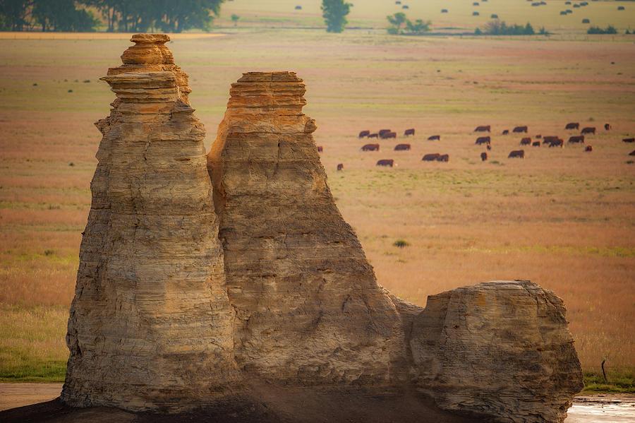 Castle Rock Cattle by Jeff Phillippi