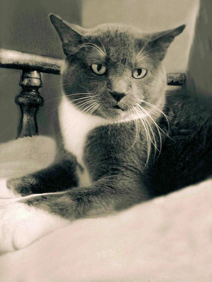 Cat Boticas Portrait 10 by Miss Pet Sitter