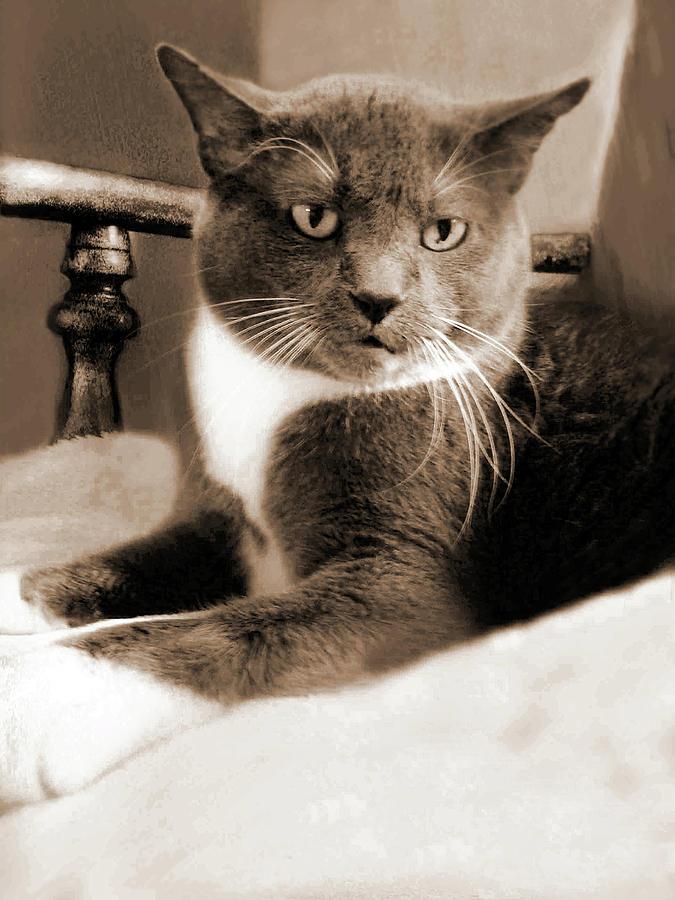 Cat Boticas Portrait 12 by Miss Pet Sitter