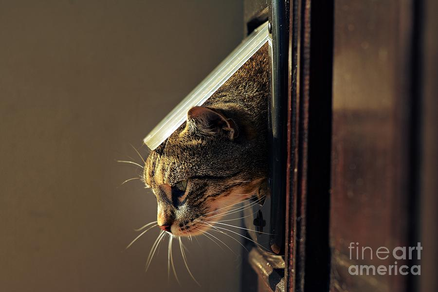 Play Photograph - Cat Crawls Out Of The House by Davidtb