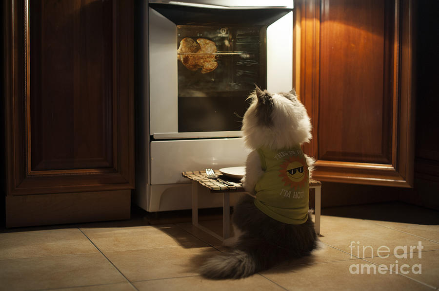 Lunch Photograph - Cat Expects Cooking Chicken by Kuban girl