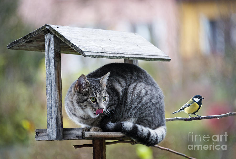 Small Photograph - Cat Hunting A Bird by Kuttelvaserova Stuchelova