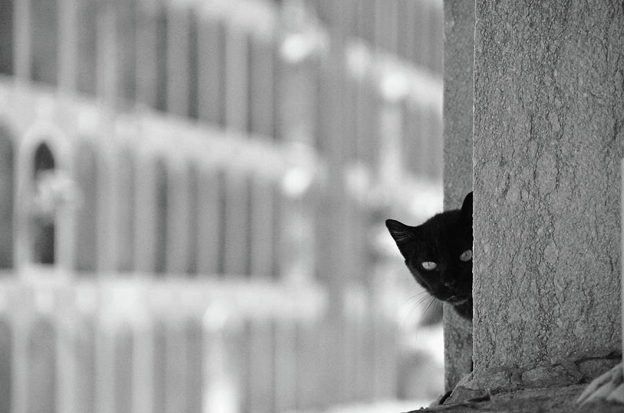 Pets Photograph - Cat In Cemetery by All Copyrights Reserved By Harris Hui